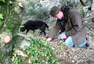 Truffle Hunting in Tuscany and visit to a cellar