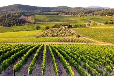CHIANTI and VALDARNO for your holiday close to Florence and Arezzo